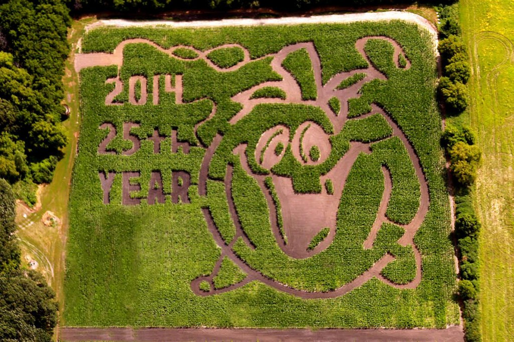 The corn maze is different every year.